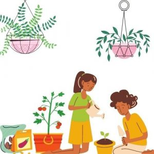vegetable seeds for plantation
