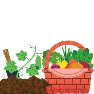 vegetables in kitchen garden