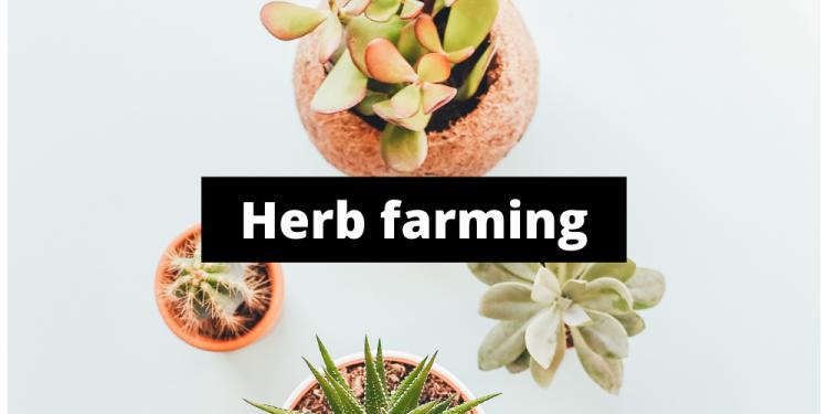 herb farming