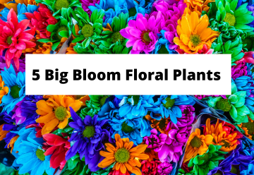big bloom flowers