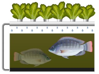 The fish Aquaponics System
